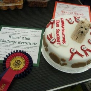 Bath Championship Show - Team Silkcroft Celebration