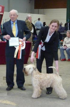 Millie BOS CC National Terrier 2013