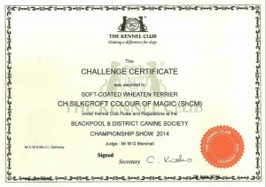 CH Silkcroft Colour Of Magic ShCM - Blackpool 2014 Bitch CC