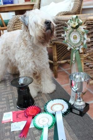 Millie RBIS Okehamption 2013 Prizes