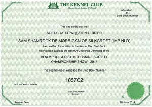 Sam Shamrock De Morrigan Of Silkcroft - Blackpool 2014