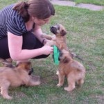 Silkcroft Soft Coated Wheaten Terrier Puppies