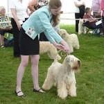 Millie in Breed Judging Leeds 2014 - Silkcroft