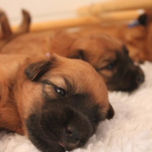Puppy photos updated