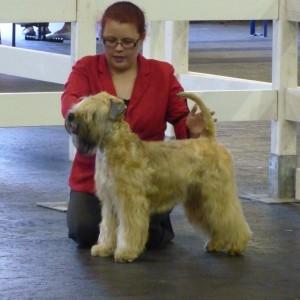 Lottie Best Puppy In Breed at Paignton 2014