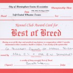 CH Silkcroft Colour Of Magic ShCM - Birmingham 2014 Best Of Breed Certificate