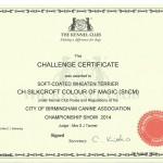 CH Silkcroft Colour Of Magic ShCM - KC CC Certificate - City Of Birmingham 2014
