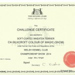 CH Silkcroft Colour Of Magic ShCM - KC CC Certificate - WKC 2014