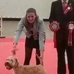 Silkcroft Sky Full Of Stars - RBIS Plymouth 2014 - Silkcroft Soft Coated Wheaten Terriers