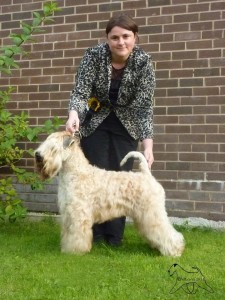 Bryson - Silkcroft Wheaten Terriers 2014