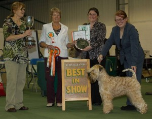 Silkcroft Soft Coated Wheaten Terriers 2014