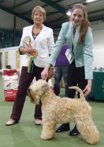 Silkcroft Soft Coated Wheaten Terriers 2014