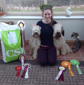 Silkcroft Sky Full Of Stars - Liskeard 2014 - Silkcroft Soft Coated Wheaten Terriers