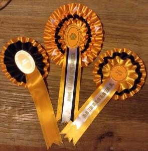 Silkcroft Sky Full Of Stars - RBPIS Truo 2014 - Silkcroft Soft-Coated Wheaten Terriers 2014