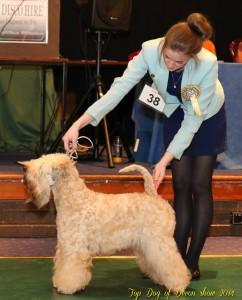 CH Silkcroft Colour Of Magic ShCM - Top Dog Of Devon 2014 - Silkcroft Wheaten Terriers
