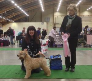 Silkcroft Your Heart To Me - Swedish National Terrier 2014 - Silkcroft Wheaten Terriers 2014