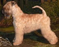 Silkcroft World Explorer - Top Puppy 2014