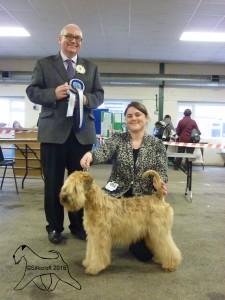Silkcroft One Step Closer - Best Puppy In Breed - Lichfield 2015 - Silkcroft Soft Coated Wheaten Terrier