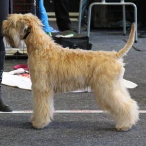 Posh wins Best Puppy in Kolback, Sweden