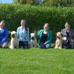 Team Silkcroft June 2015 - Silkcroft Soft Coated Wheaten Terriers 2015