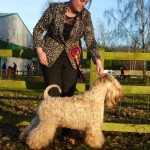 INT/SWE/IT CH Modny Style Loverboy at Seamrog - Best Of Breed Cheltenham 2015