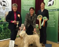 Silkcroft Crests Of Waves - Best In Show - Silkcroft Soft Coated Wheaten Terriers 2015