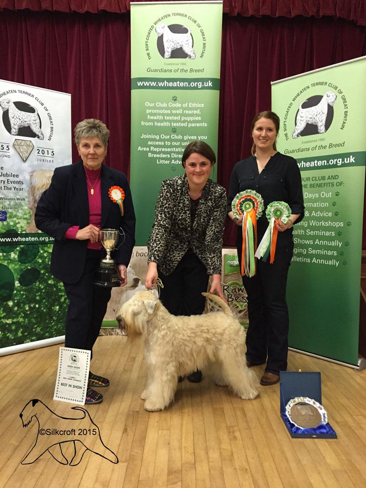 Silkcroft Crests Of Waves - Best In Show - Silkcroft Soft Coated Wheaten Terriers 2015