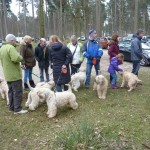 Silkcroft Soft Coated Wheaten Terriers WOW day March 2015