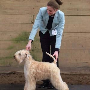 Lola Reserve Best Of Breed At Okehampton 2015