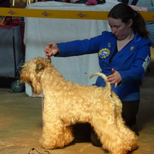 Tzin Best Of Breed and TG2 at Retford 2015