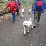 Silkcroft Soft-Coated Wheaten Terriers - Devon WOW