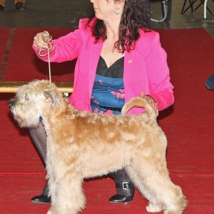 Bryony Wins Best Youth In Breed at Antwerp