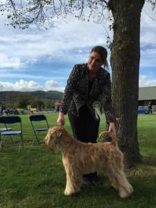 Silkcroft One Step Closer Best Puppy WELKS 2015