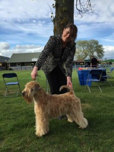 Silkcroft One Step Closer Best Puppy WELKS 2015