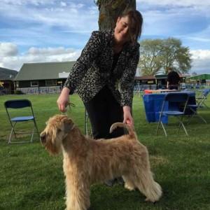 Perri Wins Best Puppy In Breed at WELKS 2015