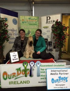 Modny Style Loverboy at Seamrog - Combined International Show Dublin 2015 - Silkcroft Soft Coated Wheaten Terriers