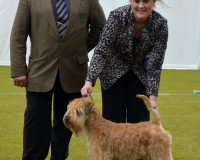 Bath 2015 - Silkcroft One Step Closer - Silkcroft Soft Coated Wheaten Terriers