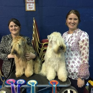 Beckett wins Reserve Best Of Breed at Redditch