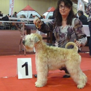 Bryony Wins CAC at Weize, Belgium 2015