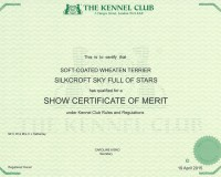 Silkcroft Sky Full Of Stars achieves Show Certificate Of Merit title