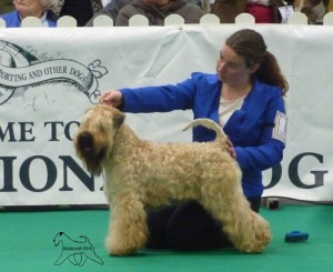 Int IT SWE CH Modny Style Loverboy at Seamrog (IMP RUS) - Silkcroft Soft Coated Wheaten Terriers 2015