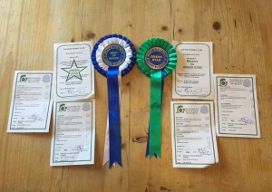 Bray All Breeds Championship Dog Show - Silkcroft Soft Coated Wheaten Terriers 2015