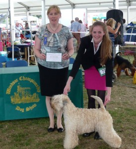 CH Silkcroft Colour Of Magic ShCM - Silkcroft Soft Coated Wheaten Terriers 2015