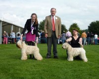 Millie and Lola win at Darlington Champ Show 2015