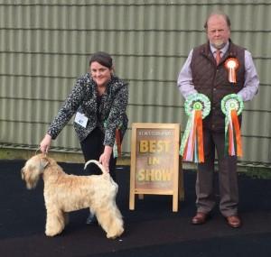 Silkcroft On Step Closer - BIS - Silkcroft Soft-Coated Wheaten Terriers 2015