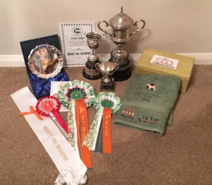 Trphy haul from SCWT Club of GB Open Show North 2015