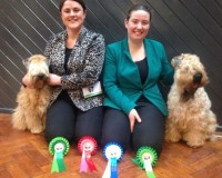 Silkcroft Soft Coated Wheaten Terriers - Team Silkcroft at Stockport 2015
