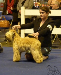 Silkcroft Aurora's Encore - Best Puppy Bitch LKA 2015 - Silkcroft Wheaten Terriers 2015