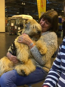 Aura & Gail - Silkcroft Wheaten Terriers 2015