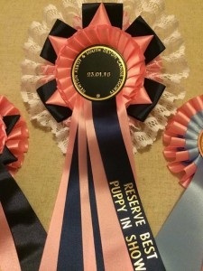 Aura - Silkcroft Auroras Encore - Silkcroft Soft Coated Wheaten Terriers 2016
